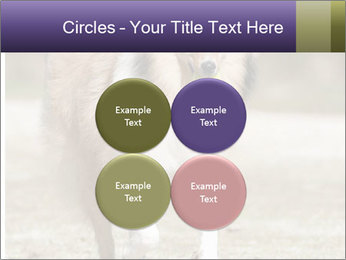 Great Collie Dog PowerPoint Template - Slide 38