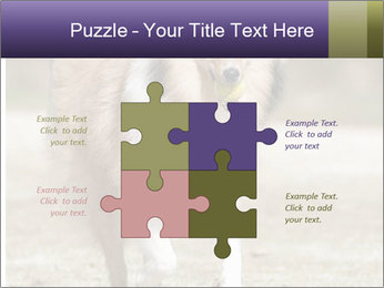 Great Collie Dog PowerPoint Templates - Slide 43