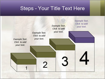 Great Collie Dog PowerPoint Template - Slide 64