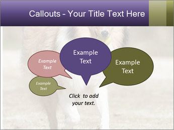 Great Collie Dog PowerPoint Templates - Slide 73