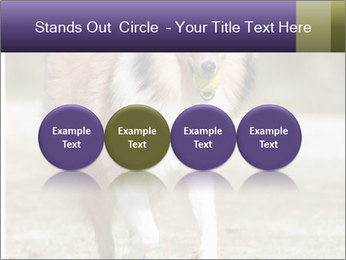 Great Collie Dog PowerPoint Template - Slide 76