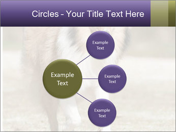 Great Collie Dog PowerPoint Template - Slide 79