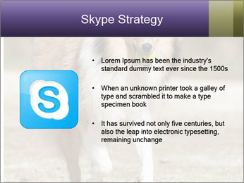 Great Collie Dog PowerPoint Templates - Slide 8