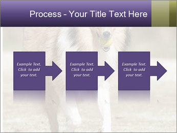 Great Collie Dog PowerPoint Template - Slide 88