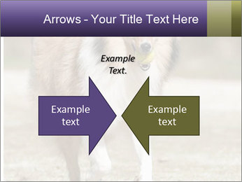 Great Collie Dog PowerPoint Template - Slide 90