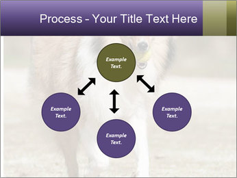 Great Collie Dog PowerPoint Template - Slide 91