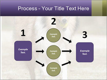 Great Collie Dog PowerPoint Template - Slide 92