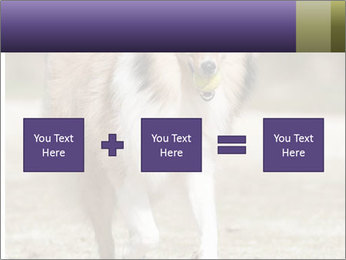 Great Collie Dog PowerPoint Template - Slide 95