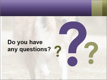 Great Collie Dog PowerPoint Template - Slide 96