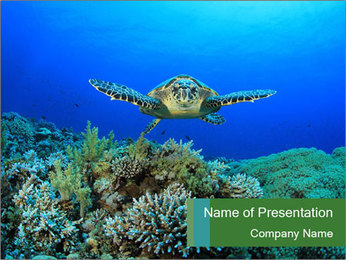 Wild Turtle PowerPoint Template - Slide 1