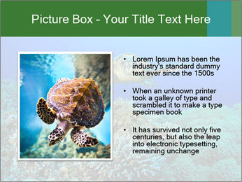 Wild Turtle PowerPoint Template - Slide 13