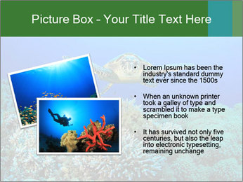 Wild Turtle PowerPoint Template - Slide 20