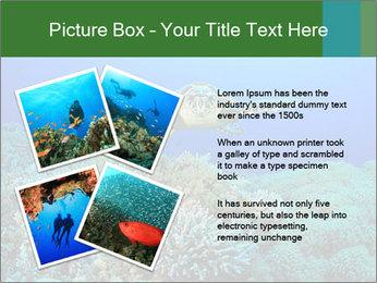 Wild Turtle PowerPoint Templates - Slide 23