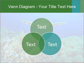 Wild Turtle PowerPoint Template - Slide 33