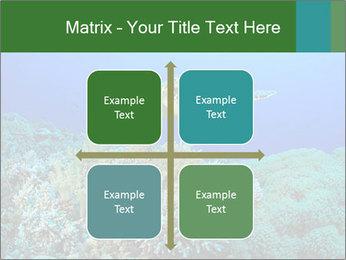 Wild Turtle PowerPoint Templates - Slide 37