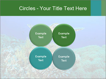 Wild Turtle PowerPoint Template - Slide 38