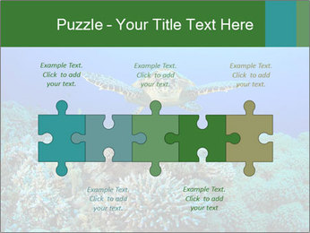 Wild Turtle PowerPoint Template - Slide 41