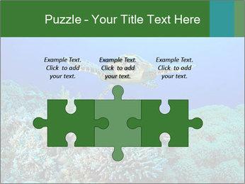 Wild Turtle PowerPoint Templates - Slide 42