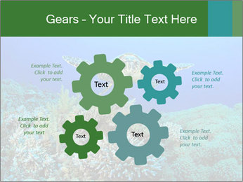 Wild Turtle PowerPoint Templates - Slide 47