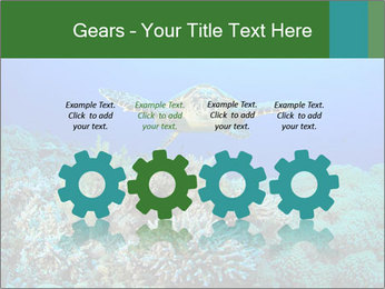 Wild Turtle PowerPoint Templates - Slide 48
