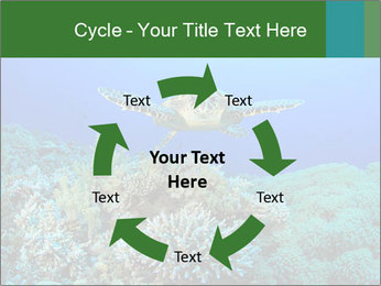 Wild Turtle PowerPoint Templates - Slide 62