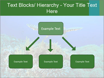 Wild Turtle PowerPoint Templates - Slide 69