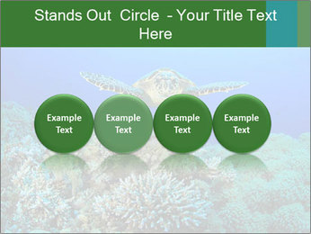 Wild Turtle PowerPoint Templates - Slide 76