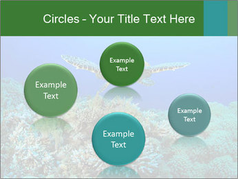 Wild Turtle PowerPoint Template - Slide 77