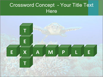 Wild Turtle PowerPoint Templates - Slide 82