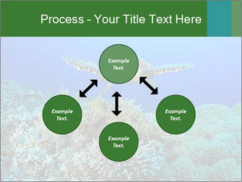 Wild Turtle PowerPoint Template - Slide 91