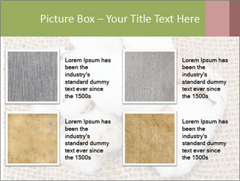 Organic Cotton PowerPoint Templates - Slide 14