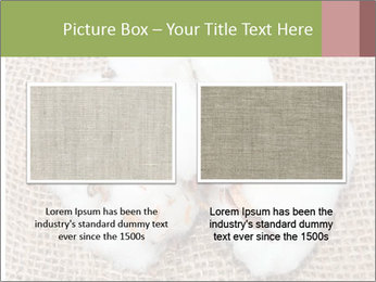 Organic Cotton PowerPoint Templates - Slide 18