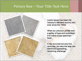 Organic Cotton PowerPoint Templates - Slide 23