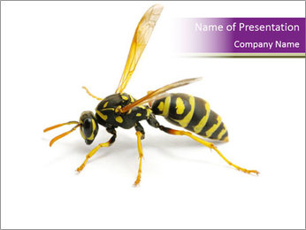 Wild Bee PowerPoint Template - Slide 1