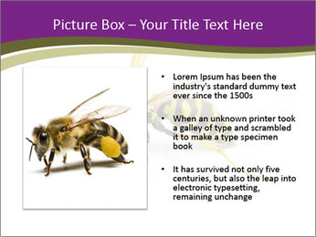 Wild Bee PowerPoint Template - Slide 13