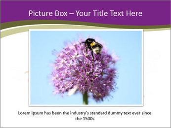 Wild Bee PowerPoint Template - Slide 15