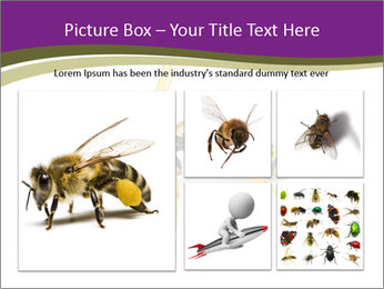 Wild Bee PowerPoint Template - Slide 19