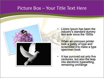 Wild Bee PowerPoint Template - Slide 20