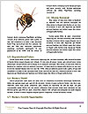 0000089283 Word Templates - Page 4