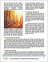 0000089295 Word Template - Page 4