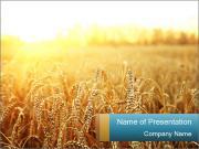 Golden Field PowerPoint Templates