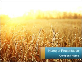 Golden Field PowerPoint Template - Slide 1
