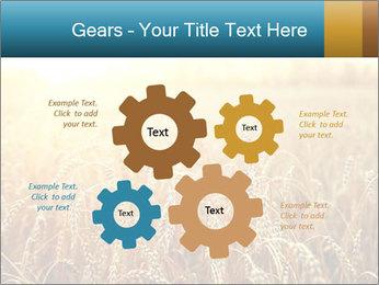Golden Field PowerPoint Template - Slide 47
