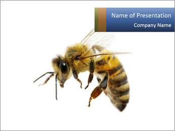 Bee On White Background PowerPoint Template