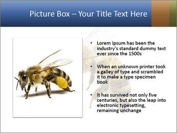 Bee On White Background PowerPoint Templates - Slide 13