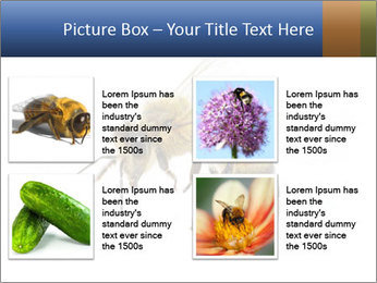 Bee On White Background PowerPoint Templates - Slide 14