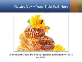Bee On White Background PowerPoint Templates - Slide 15