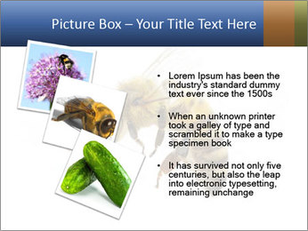 Bee On White Background PowerPoint Templates - Slide 17
