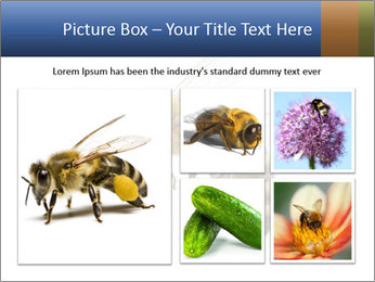 Bee On White Background PowerPoint Templates - Slide 19