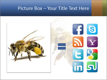Bee On White Background PowerPoint Templates - Slide 21